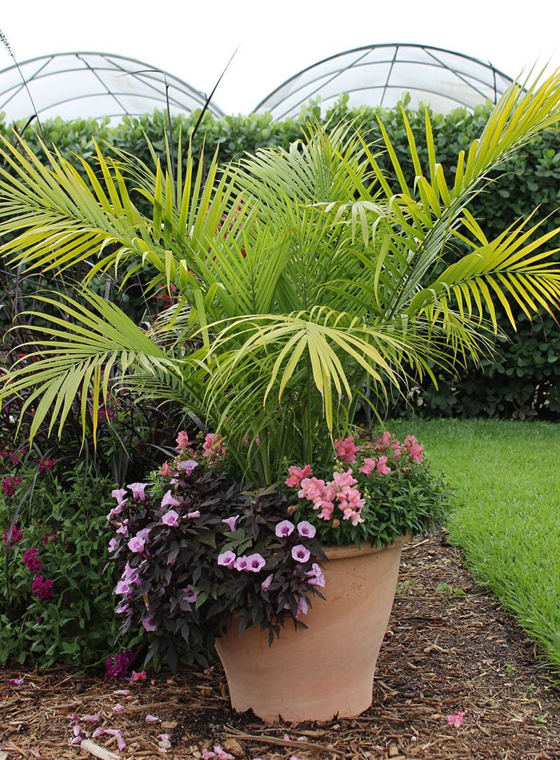container combo ideas from costa farms costa farms pertaining to 10 plant combination ideas for container gardens awesome and gorgeous