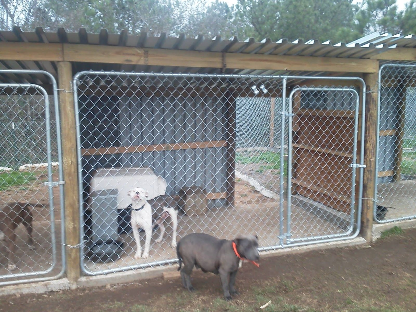 17.kennel setup with plywood in the middle to prevent fights and dogs via SIMPHOME.COM