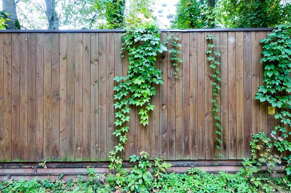 SIMPHOME.COM 10 Tricks How to Upgrade Wood Fence Ideas for Backyard 10.Vines on Top