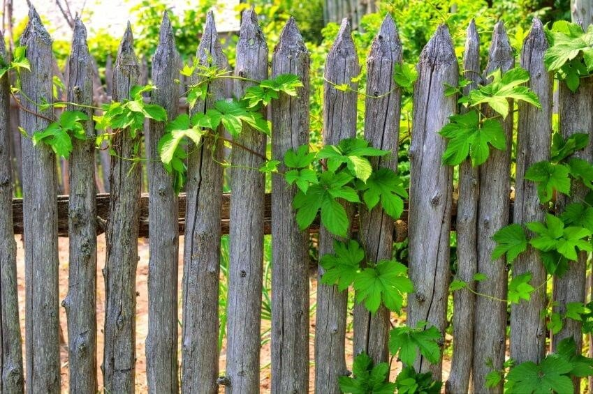 SIMPHOME.COM 10 Tricks How to Upgrade Wood Fence Ideas for Backyard 4.Raw Wood Picket Fence to Give a Rustic Look
