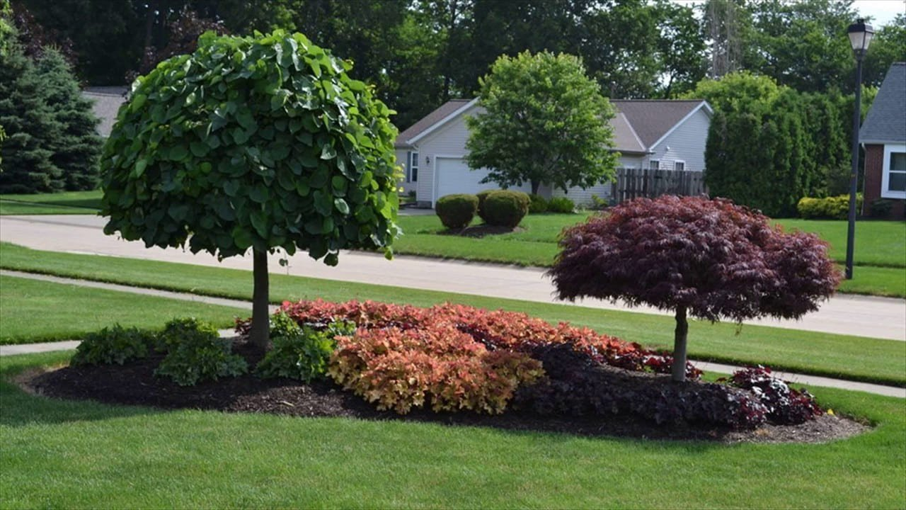 Simphome.com a wonderful backyard landscaping idea use these trees youtube in 2020 2021
