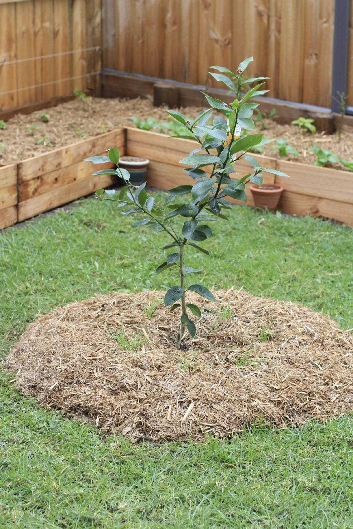 Simphome.com fruit trees in garden design ideas for planting fruit trees in the year 2020 2021 2022