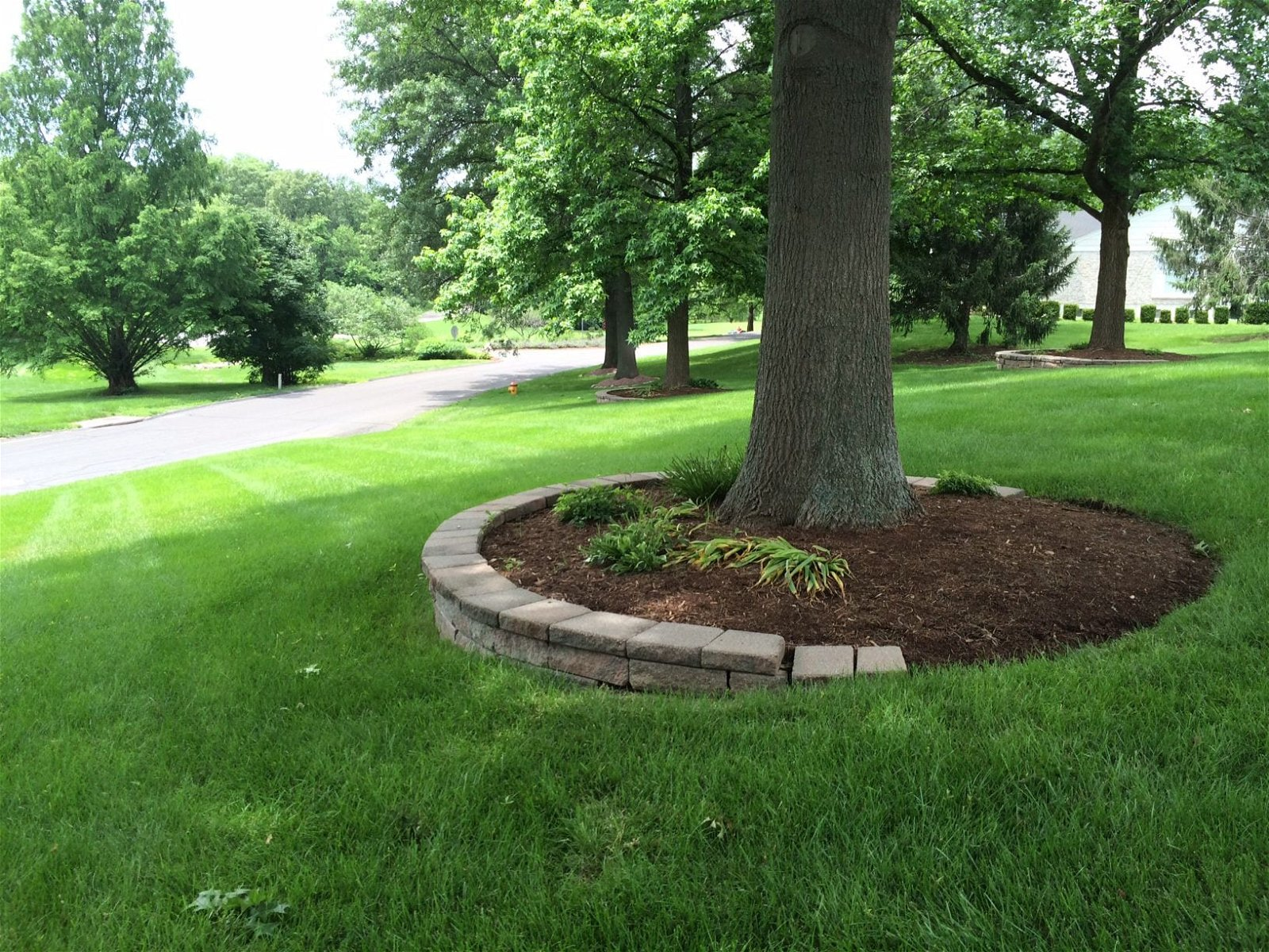 Simphome.com mulching around tree ringsfor our front yard tree my outdoor for 2020 2021