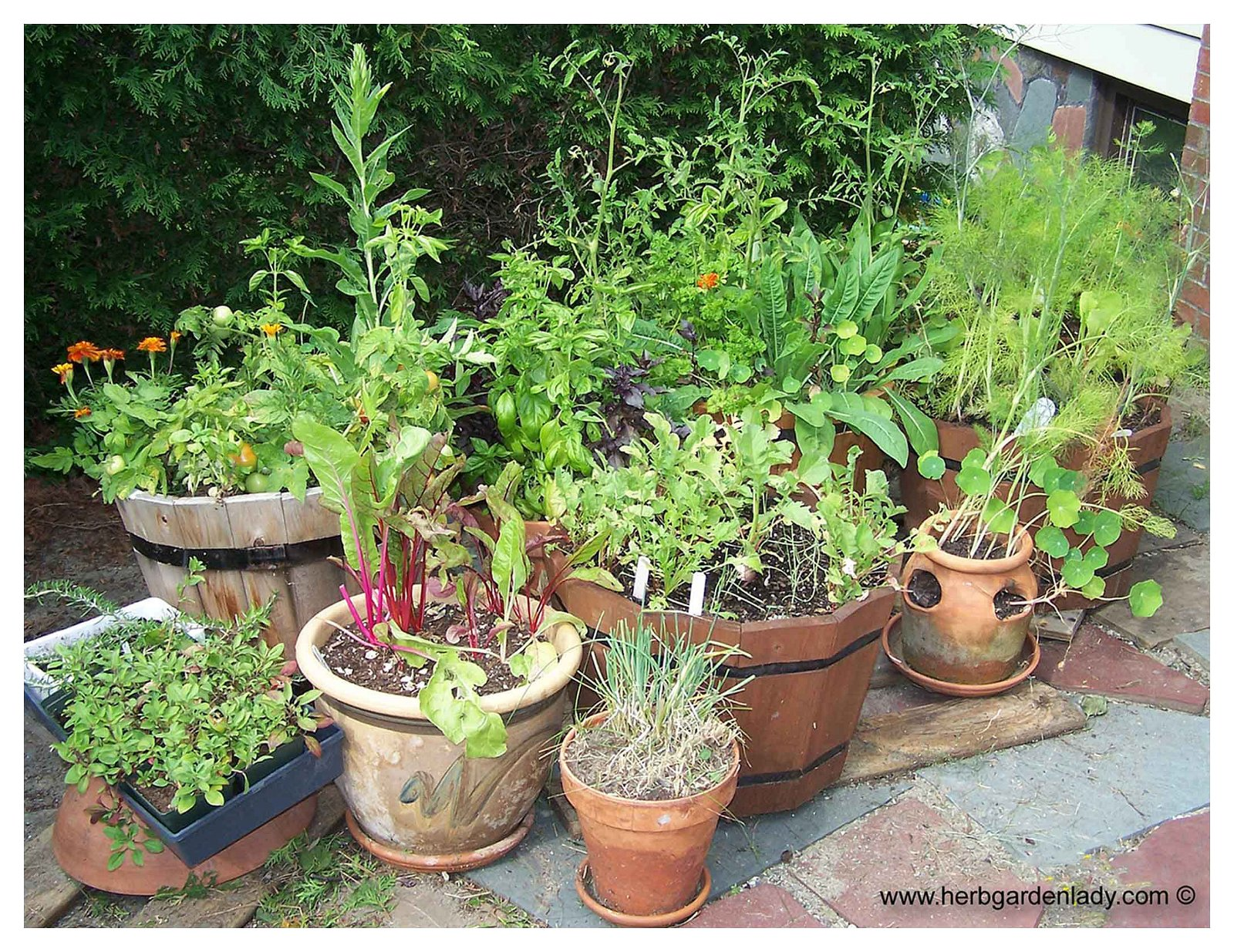 Simphome.com plant a container garden following these easy steps pertaining to potted herb garden ideas