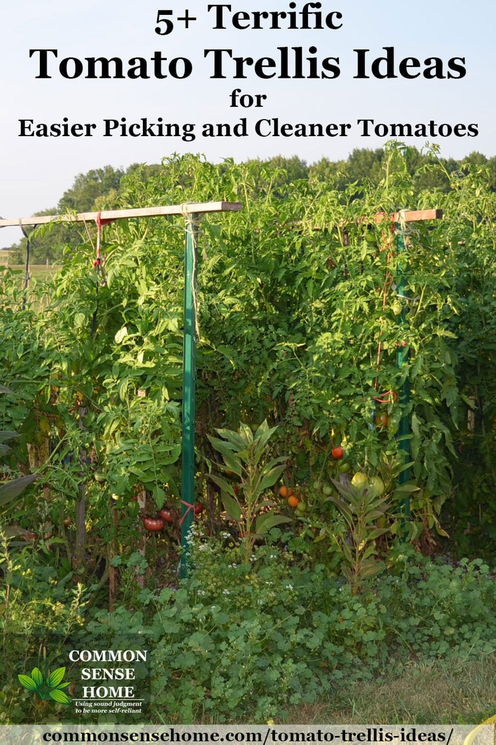 5 terrific tomato trellis ideas for easier picking and cleaner tomatoes in 10 tomato garden ideas most brilliant as well as beautiful
