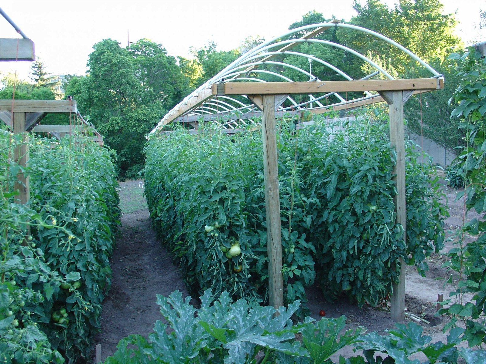 in tomato gardening ideas landscaping and gardening design pertaining to tomato garden ideas