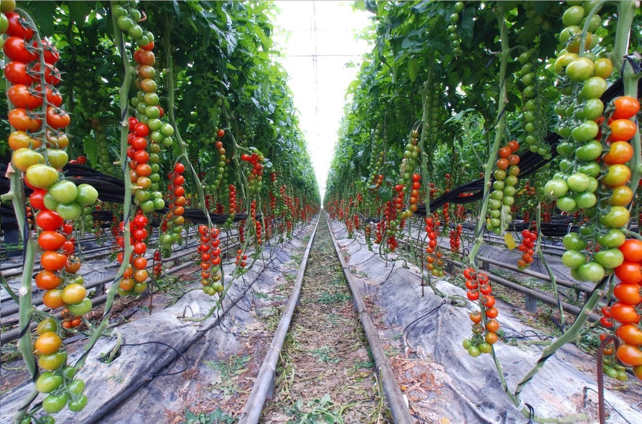 vegetable garden for beginners tips home vegetable garden ideas within 10 tomato garden ideas most brilliant as well as beautiful