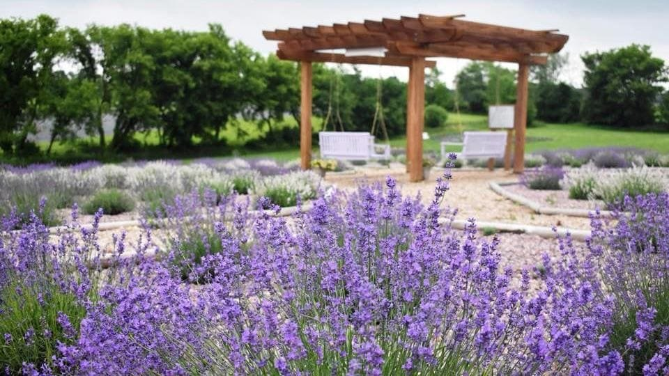 9. Lavender in Modern Landscaping by Simphome.com 3